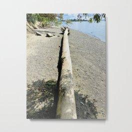 Walking On Driftwood Metal Print