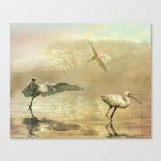 Spoonbill morning Canvas Print