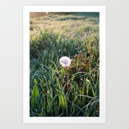 Dandelion clock in surise light Art Print