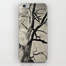 Majesty iPhone & iPod Skin