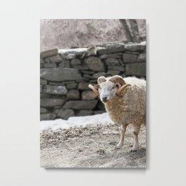 Aries, the Ram, in Winter Barnyard Metal Print