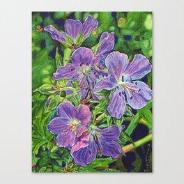Six Wild Geraniums Canvas Print