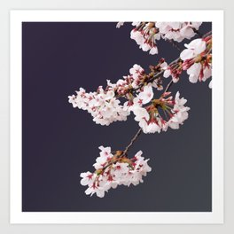 Cherry Blossoms (illustration) Art Print