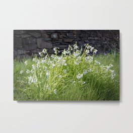 White Bells in Bloom Metal Print