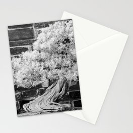Bonsai Juniper Thrives in its Tray in a Japanese Garden Stationery Cards