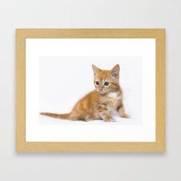 Ginger Kitten Framed Art Print