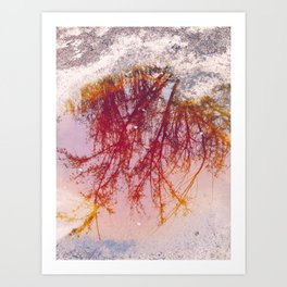 Puddle of tree... or mud Art Print