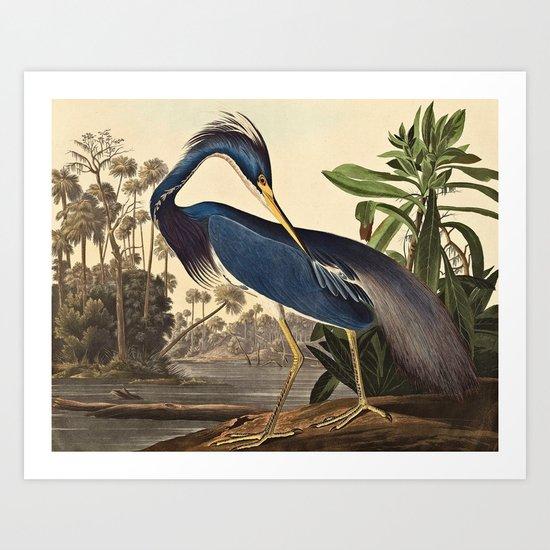 John James Audubon - Louisiana Heron by fineartpaintings