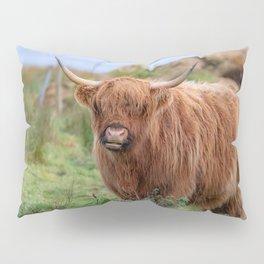 Long haired Highland cattle - Highland cow, Highlander, Heilan coo - Thurso, The Highlands, Scotland Pillow Sham