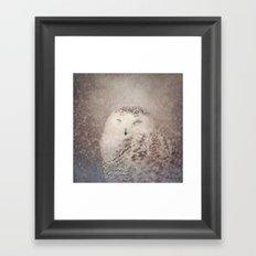 Snowy Owl in the snow Framed Art Print
