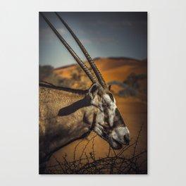 Oryx Antilope Canvas Print