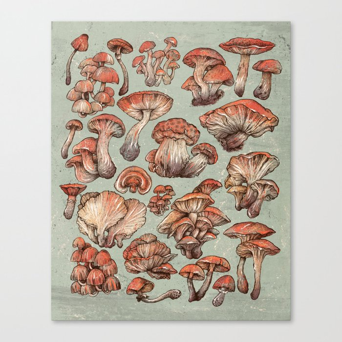 A Series of Mushrooms Canvas Print