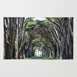 Cypress Tree Tunnel Rug