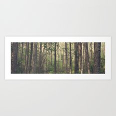 A Quiet Walk Art Print