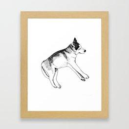 Sleeping Siberian Husky Framed Art Print