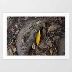 lone yellow leaf  Art Print