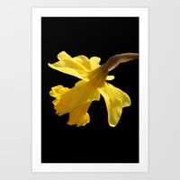 Daffodil Delight Art Print