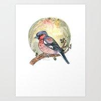 Chaffinch Art Print