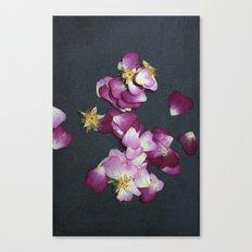 Wild Rose Petals Canvas Print