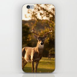 White Tailed Deer In Field iPhone Skin