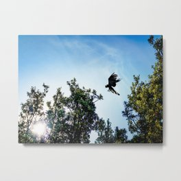 Yellow-Tailed Black Cockatoo Jumping Between Trees Metal Print
