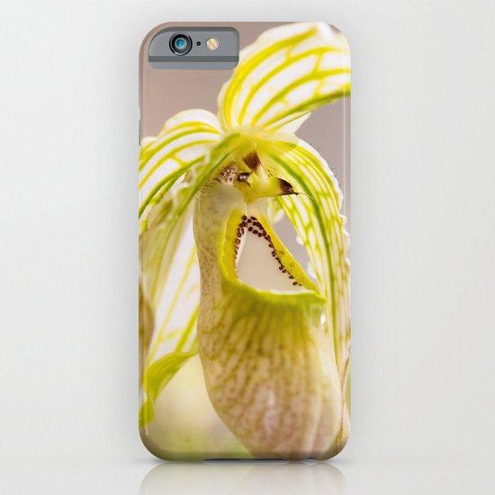 Phragmidedium Orchid iPhone & iPod Case