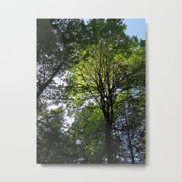 Sunny at the Pointe 48 Metal Print