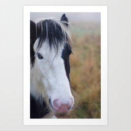 Black and White Horse Portrait Art Print