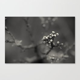 spring is upcoming - black'n white Canvas Print