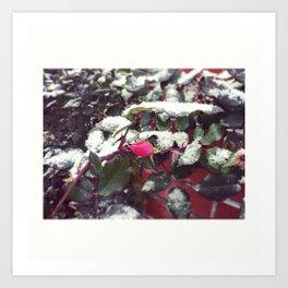 snowy beauty Art Print
