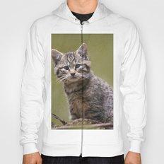 Scottish Wildcat Kitten Hoody