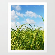 Ripe Rice Art Print