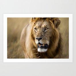 Lion, Masai Mara Art Print