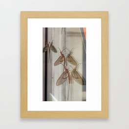 Reflections of the Mayfly Framed Art Print