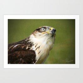 Ferruginous Hawk I Art Print