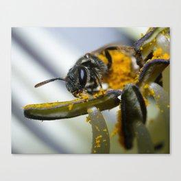 Sweat Bee on Hosta Canvas Print