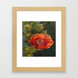 DESERT BEAUTY Framed Art Print