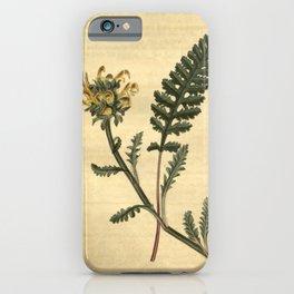 Flower 2506 pedicularis canadensis Canadian Louse wort10 iPhone Case