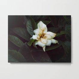 Solitary Flower Metal Print