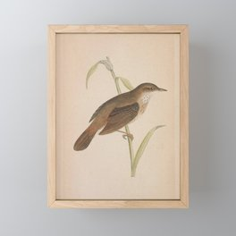 Vintage Print - A History of the Birds of Europe (1859) - River Warbler Framed Mini Art Print