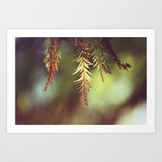 Colors of the Season Art Print