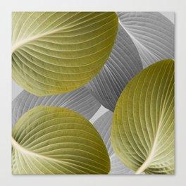 Beautiful Large Leaves #decor #society6 #buyart Canvas Print