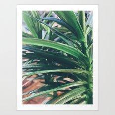 Tropical feeling Art Print
