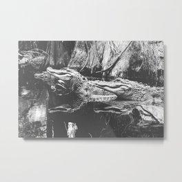 American Alligators Black and White Photography Metal Print