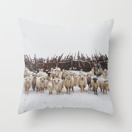 Snowy Sheep Stare Throw Pillow