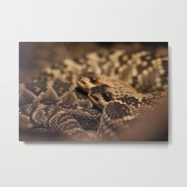 A Pair of Snake Eyes Metal Print
