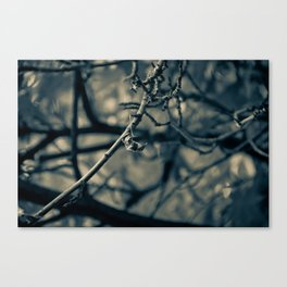 Spiderleaf Canvas Print