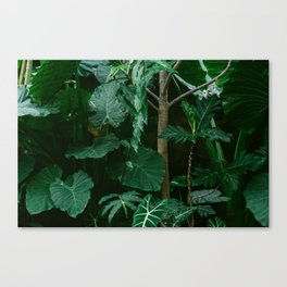 Botanical Jungle Canvas Print