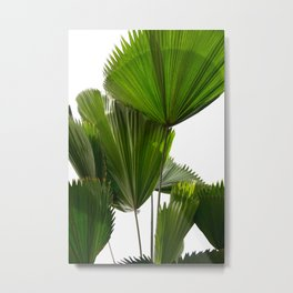 Palm Tree Photography | Landscape | Palm Leaf | Tropical Leaves | Green Tropical Leaves Metal Print
