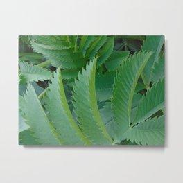 Serrated leaves Metal Print